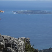 Roben Island depuis la Montagne de la Table