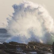Goélands et cormoransindifférents aux vagues