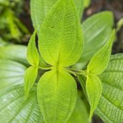 Plante dans la forêt tropicale