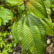 Plantes dans la forêt tropicale