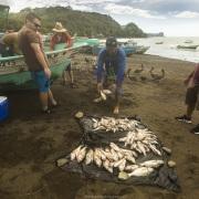 Village de pêcheurs: Vente de poisson frais