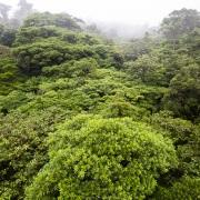 Forêt tropicale: canopée