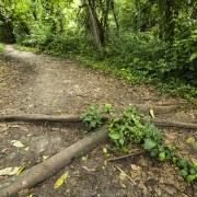Sentier dans la forêt tropicale