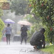 Sous la pluie tropicale