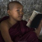 Petit moine à l'étude