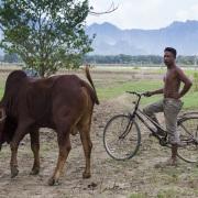 scène de vie à la campagne