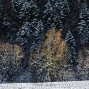 Premières neiges-Alpes fribourgeoises