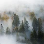 Automne dans le Jura