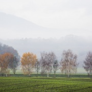 Brouillard,  plaine de l'Orbe