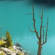Arbre mort sur un lac alpin