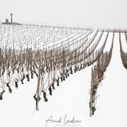 Vignoble vaudois sous la neige