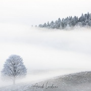 Brouillard givrant