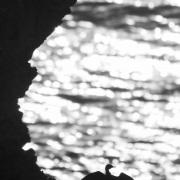 Cormoran sur une falaise