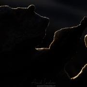Cederberg: tête et patte d'ours pétrifié?