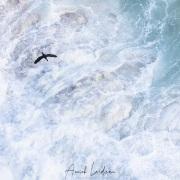 Cormoran audessus des vagues de l'Atlantique