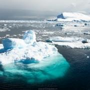 Phoque crabier sur un iceberg