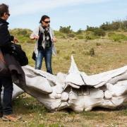 Ossements baleine franche