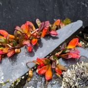 Couleurs d'automne, ile de Wrangel