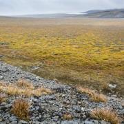 Paysage de toundra, ile de Wrangel