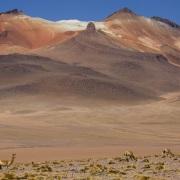 Vigogne et montagnes colorées