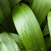 Dans la forêt tropicale
