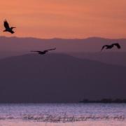 A l'aube sur le lac Ziway