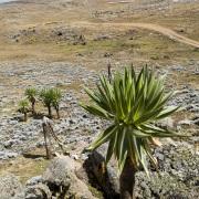 Paysage sur le plateau de Sanetti, parc national du Mont Balé