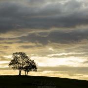 Deux arbres sur la colline
