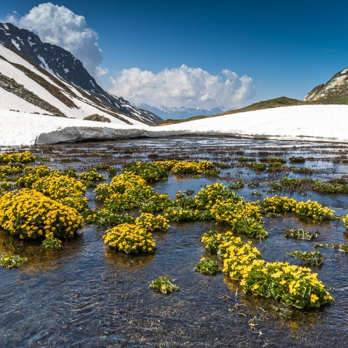 La nature reprend vie, col du Petit Saint Bernard, Savoie