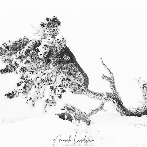 Mont Aigual: vent, neige et givre