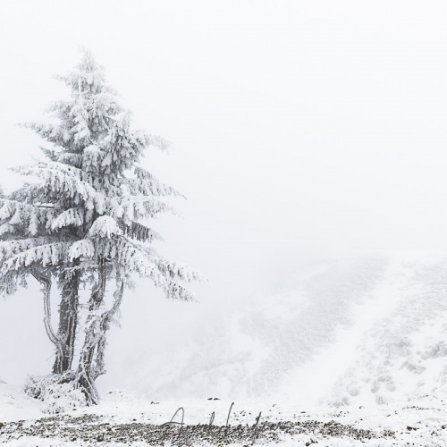 Mont Aigoual: vent, neige et givre