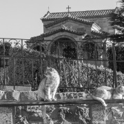 Chattes et poules sont les seuls êtres vivants de sexe féminin à être autorisés dans les monastères. Monastère de saint Stephane, Météores