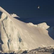 Iceberg et goéland, Baie de Disco