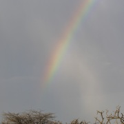 Arc-en-ciel sur le marais,, lac Baringo