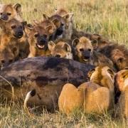 Portrait de famille, Masaï Mara