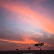 Lever de soleil, Maasaï Mara