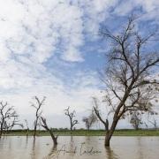 Arbres morts sur le lac Baringo
