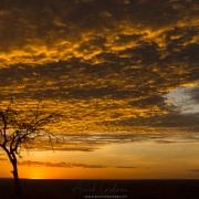 Lever de soleil sur la savanne
