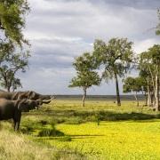 Elephants se désaltérant