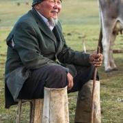 Plateau de Son Kul: à l'heure de la traite des vaches