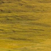 Plateau de Son Kul: retour du troupeau