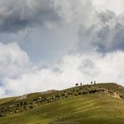 Bergers et leur troupeau