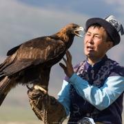 Aiglier et son aigle royal