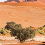 Dunes dans le parc du Namib-Naukluft