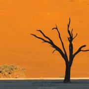 Dead Vlei et ses arbres pétrifiés