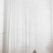 Brouillard sur la hêtraie