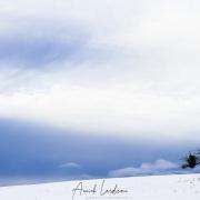 Pommier en hiver