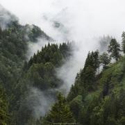 Forêt et brouillard