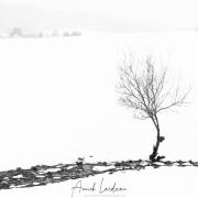 Paysage hivernal dans le Jura