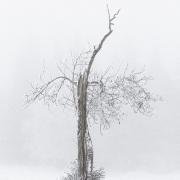 Arbre mort dans le brouillard